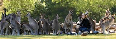 Image result for Lone Pine Sanctuary, photo