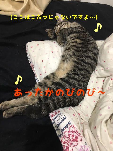 冬に気を付けたい!湯たんぽ・冬のこたつで猫の低温やけどの原因と対処法