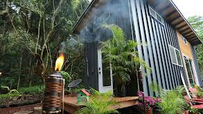 Hawaiian Jungle Smart Home thumbnail