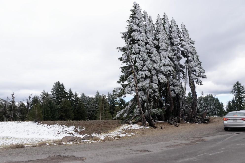 lopsided trees