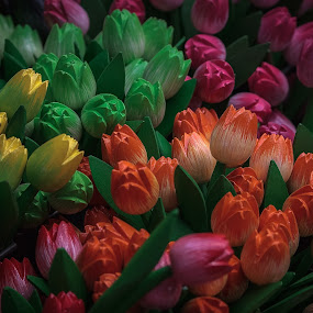 Wooden tulips by Rob Menting - Artistic Objects Other Objects ( eos, europe, noord-holland, amsterdam, travel, flower, netherlands, city )