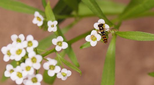 Agrobío: Control preventivo para mantener a raya al pulgón y la araña