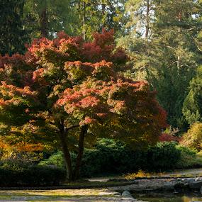 by Simon Hanžurej - Nature Up Close Trees & Bushes (  )