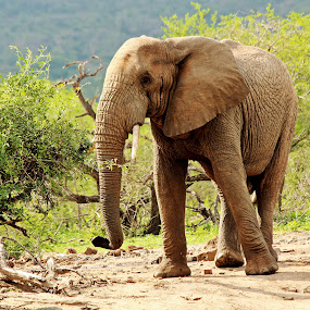 by Amanda Swanepoel - Animals Other Mammals