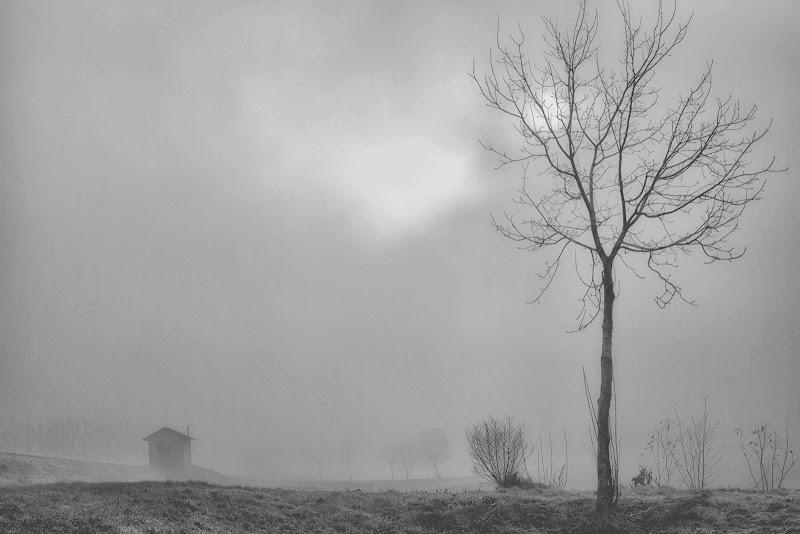 l'albero e la casetta di antonioromei