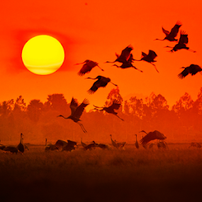Go Home by Thảo Nguyễn Đắc - Animals Birds