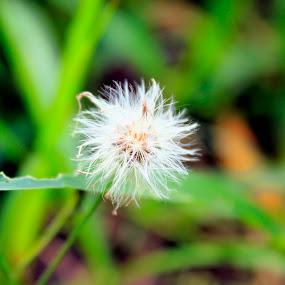 Putih Bersih by Fidan Luthfullahi - Nature Up Close Other Natural Objects (  )