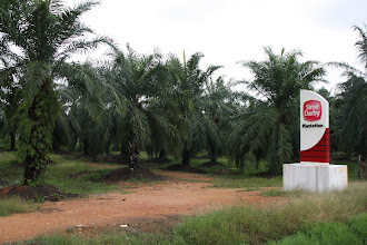 Photo: Year 2 Day 112 -  Palm Oil Plantation
