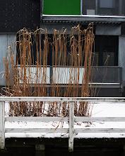 Photo: Ved Kanalen, Albertslund