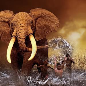 gajahcah.jpg