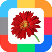 Flashcards Flowers for kids