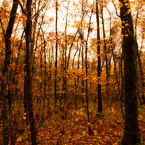 Ozark Fall by Jamie Newton - Landscapes Forests