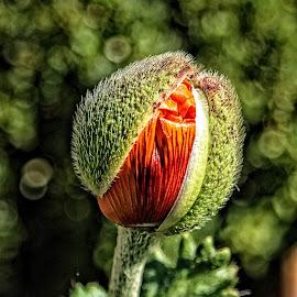 BRND bud 01 18 by Michael Moore - Flowers Flower Buds