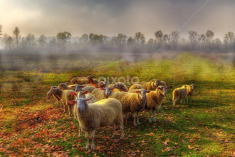 by Boris Frković - Landscapes Prairies, Meadows & Fields