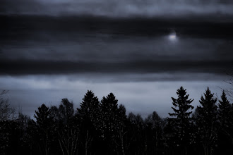 Photo: Silence in Norwegian forest...  #PlusPhotoExtract