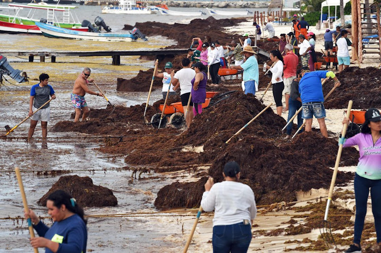 Stinky, sewage-rich seaweed storms Mexico's beaches