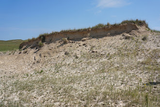 Photo: Paul has scouted out this dune and featured it in previous field trips he led, since it is one of few that has an outcrop.