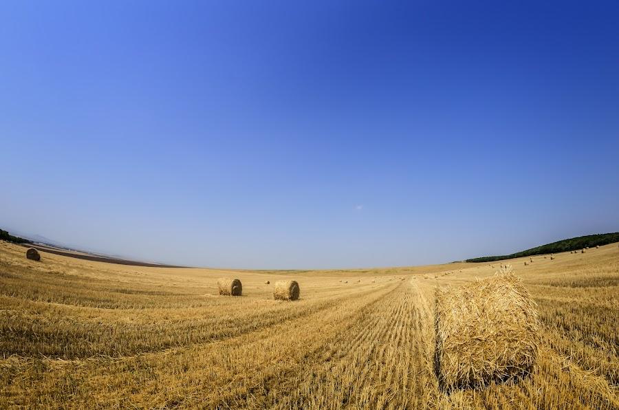 by Croitoru Constantin - Landscapes Prairies, Meadows & Fields ( field, blue sky, grain, summer, bailors )