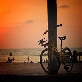 telaviv by Abu  Janjalani Abdullah - Transportation Bicycles ( bicycles, transportation )