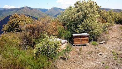 Photo: Die vlekken in de lucht zijn bijen :-)