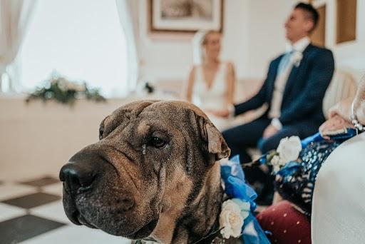 Wedding photographer Sergio Lopez (SergioLopezPhoto). Photo of 25.02.2020