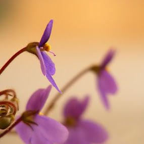 ***** by Victor Pavel - Nature Up Close Flowers - 2011-2013 ( .... )