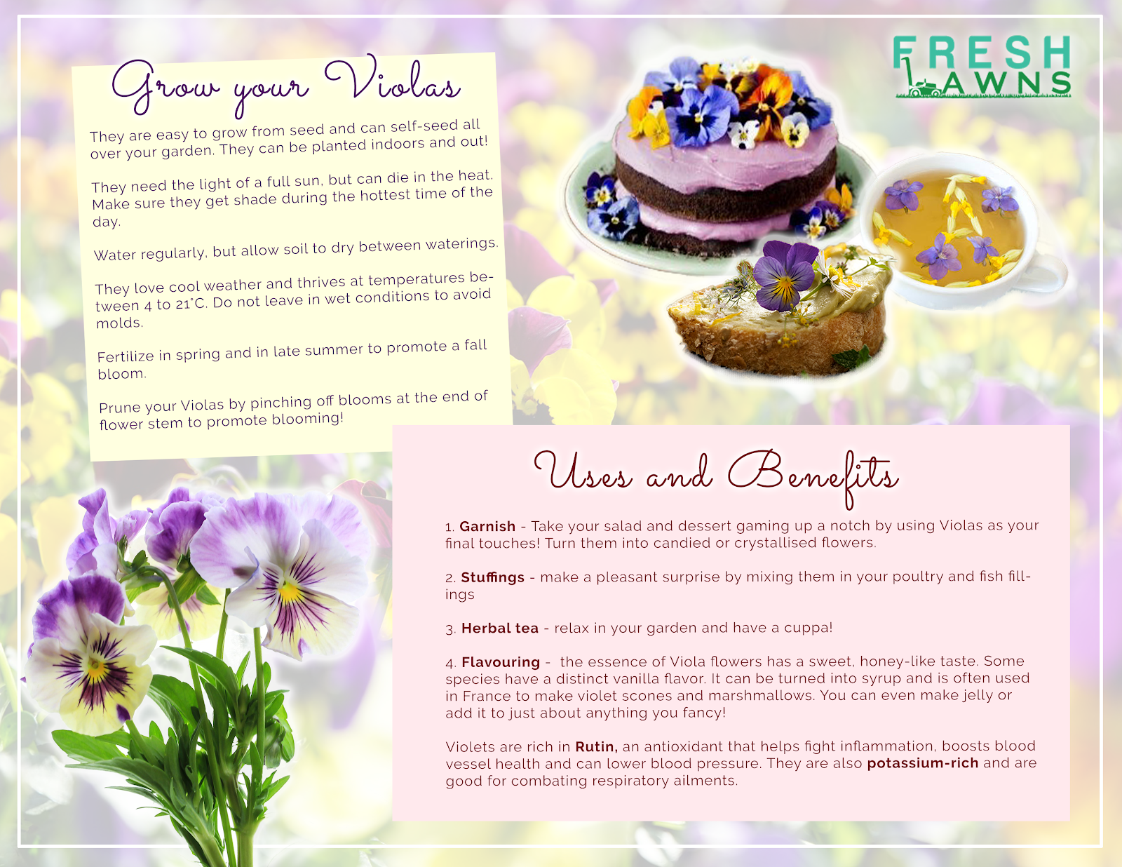 infographic for violas edible flowers