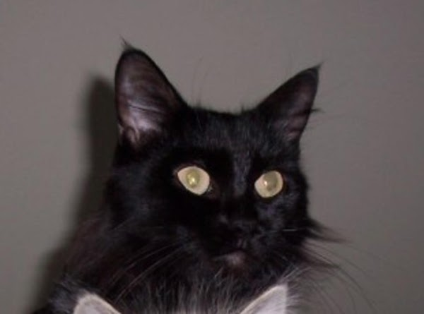 Recieve phone call from son asking how to get rid of a stray black...
