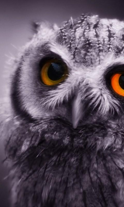 Owl Wallpapers Android Apps on Google Play
