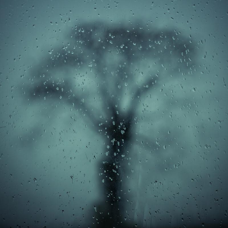 L'albero fantasma di Marcello Zavalloni
