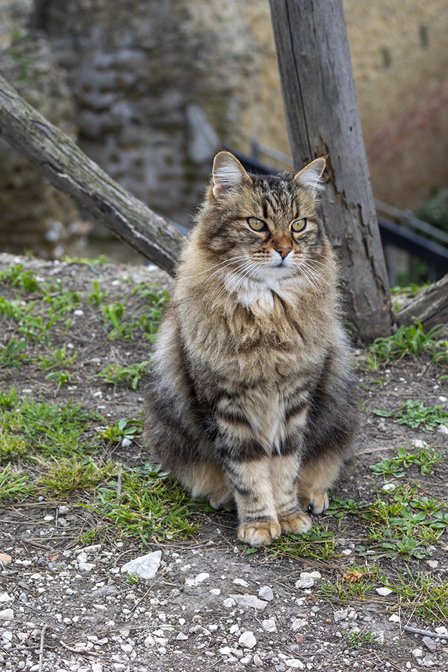 The Feline Look di mario_ph78