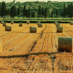 Lines by Marko Dragović - Landscapes Prairies, Meadows & Fields ( croatia, bales )