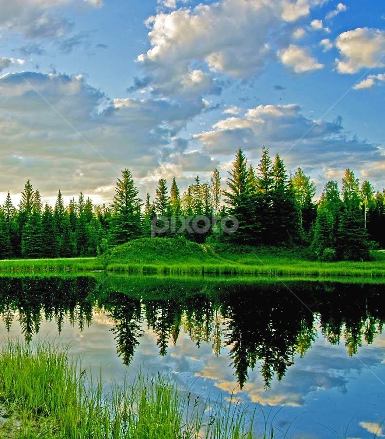 Landscape Reflection by Keri Harrish - Landscapes Waterscapes ( mirror, reflection, alberta, canada, landscape, keri harrish, pond )