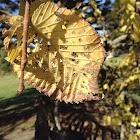 leaf of a tree