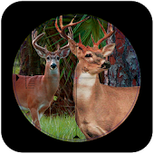 Sniper Deer Hunt:jungle hunt