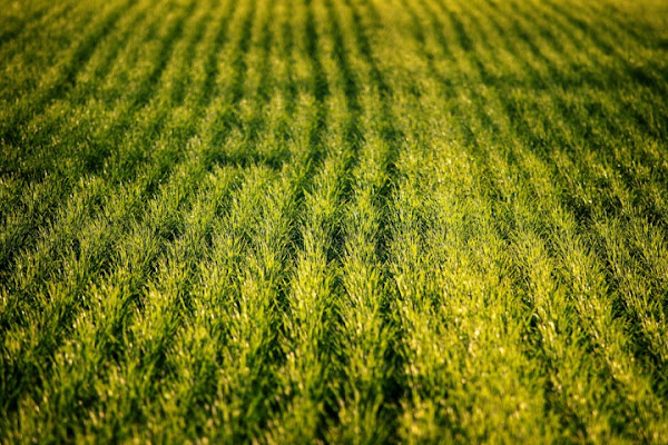 Morbito tappeto di PhotoD