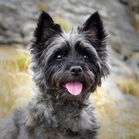 by Anngunn Dårflot - Animals - Dogs Portraits