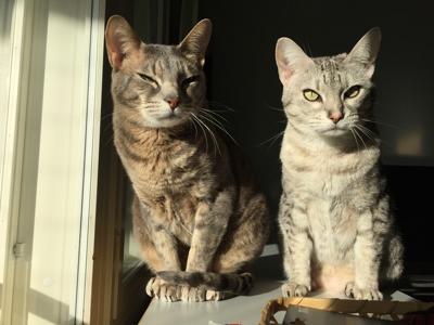 Kissat istuvat auringonpaisteessa tyytyväisen näköisinä