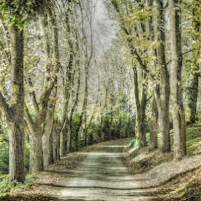The Drive by Tony Buckley - Landscapes Forests ( autumn, green, trees, road )