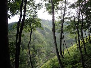 左に沢と伐採跡