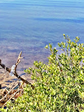 Photo: Notice the bottle caught up in the branch on the shoreline....