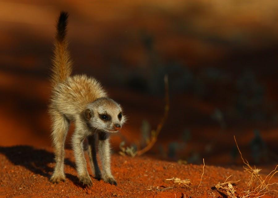 by Gareth Carter - Animals Other Mammals ( untamed odyssey, pwcbabyanimals, gareth carter )