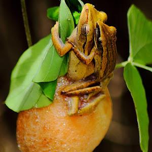 froggings.JPG