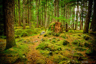Photo: What falls?  I went out to Brandywine falls and ended up mostly taking pictures of this awesome section of forest.  btw... I put up a different version/edit on my FB profile http://facebook.com/jarvie