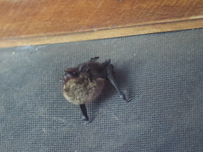 Photo: Bat outside our room.