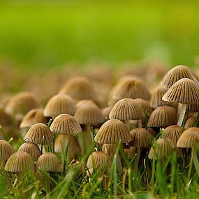 Not mush room here by Gordon Bishop - Nature Up Close Mushrooms & Fungi (  )