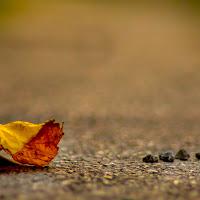 foglie e pietre. di