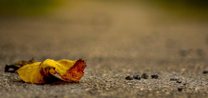 foglie e pietre. di Mony.M