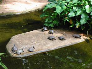 Photo: Turtle island