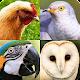 Birds Quiz - Learn All Birds! Download on Windows